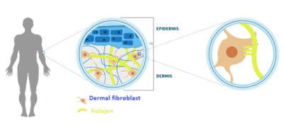 fibrocell